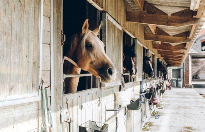 Family-Guide-Ibiza-Horses-Ibiza-min