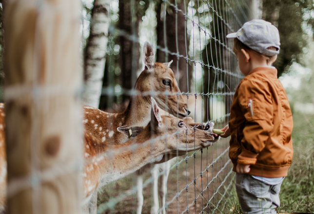 Things To Do in Tuscany Zoo