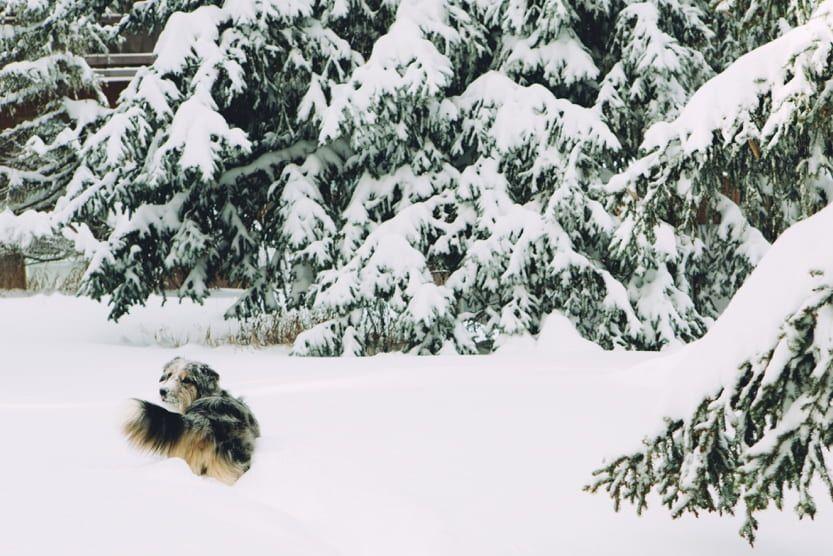 christmas-ski-holidays-christmas-walk