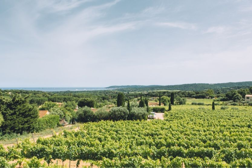 best-beaches-in-st-tropez-vineyard
