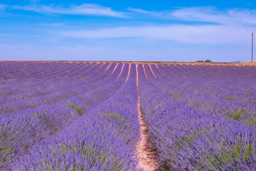 best-family-holiday-destinations-in-europe-lavender-provence