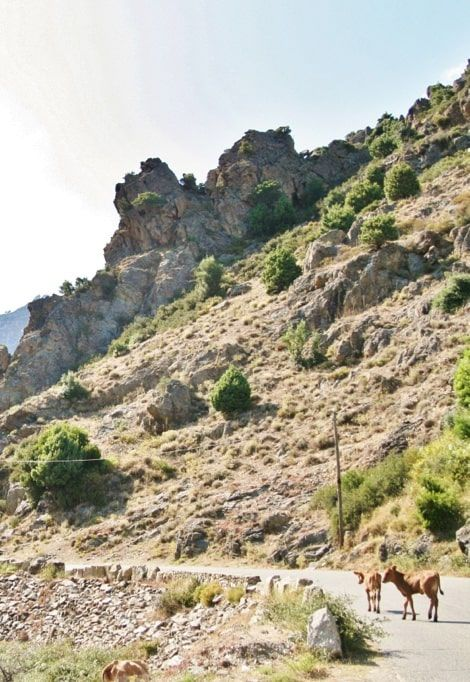 best-place-to-stay-south-corsica-rocco