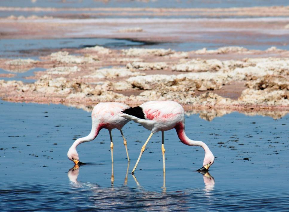 ibiza-beach-salinas-big-1