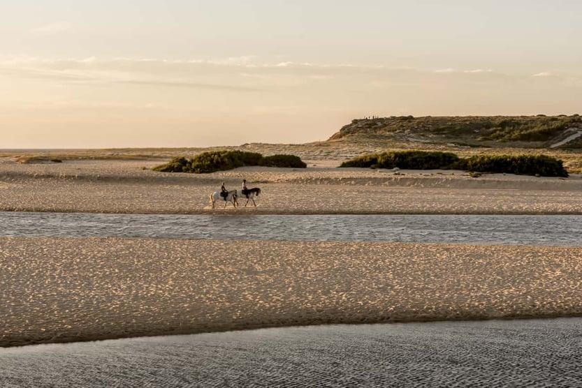 comporta-guide-horses-evening