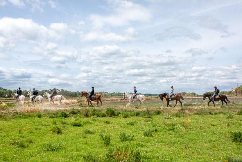 comporta_dunes_farm_horse