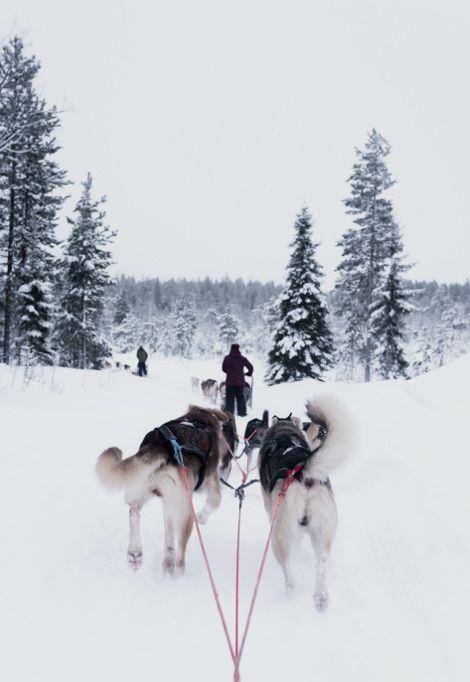 family-ski-holidays-sledding