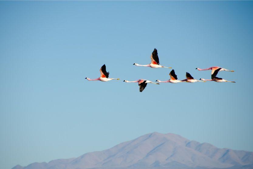ibiza-beach-flamingoes-salines