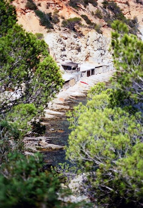 ibiza-in-december-pines