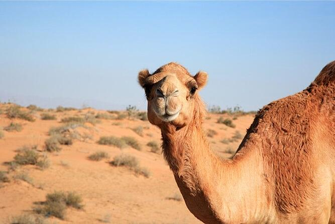best-places-to-holiday-with-kids-camel