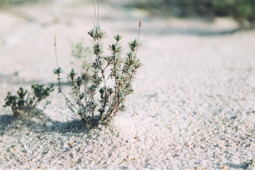 portugal-beach-holidays-weeds-1