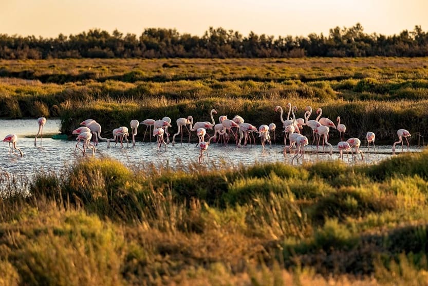 provence-in-3-days-camargue