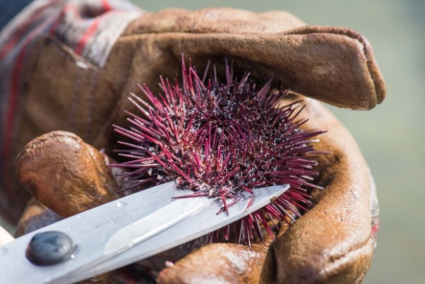 provence-in-winter-sea-urchins