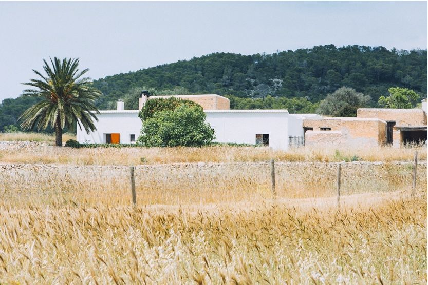 what-to-do-in-ibiza-countryside