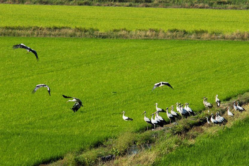 sublime-comporta-rice-fields1