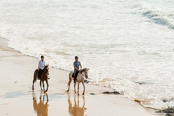 tailor-made-holidays-horses