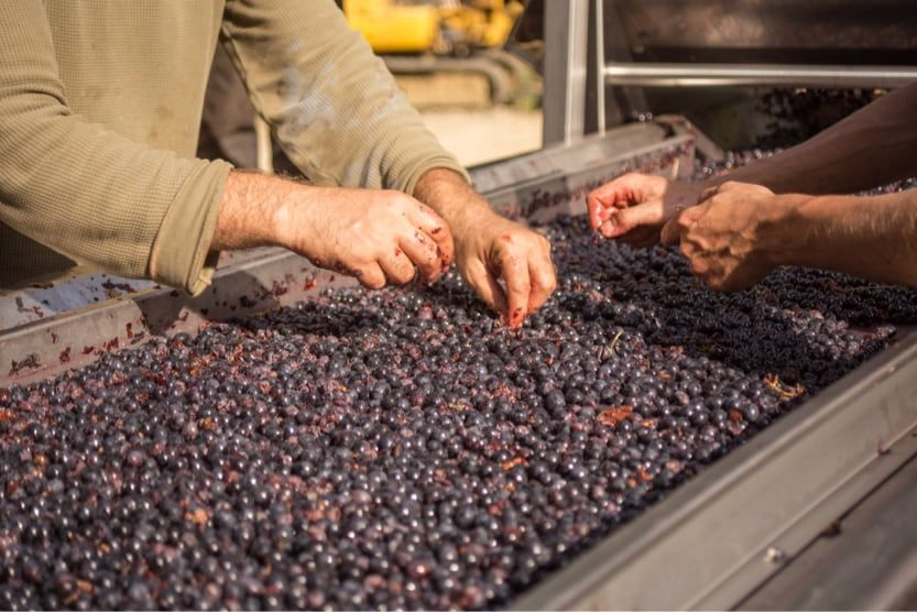 things-to-do-in-provence-wine-making
