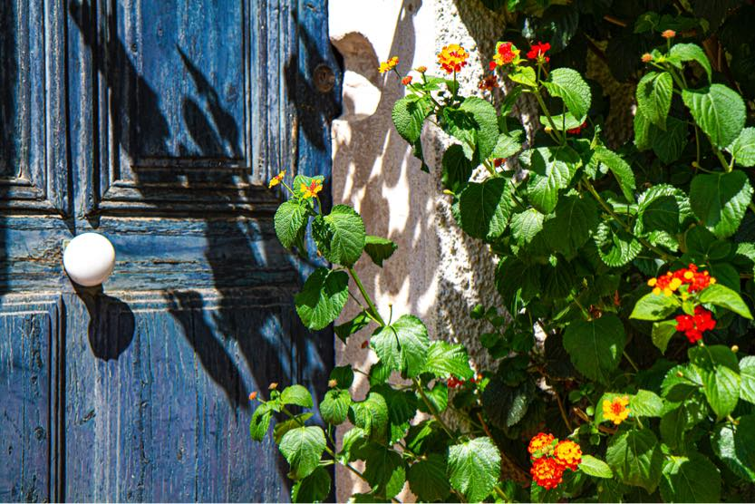 things-to-do-in-st-tropez-flowers