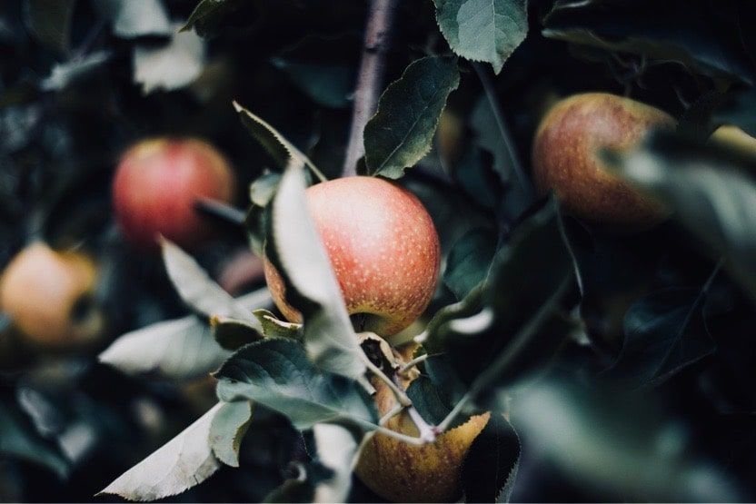 trips-to-normandy-apples