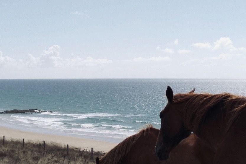 week-end-en-corse-en-famille-chevaux-min