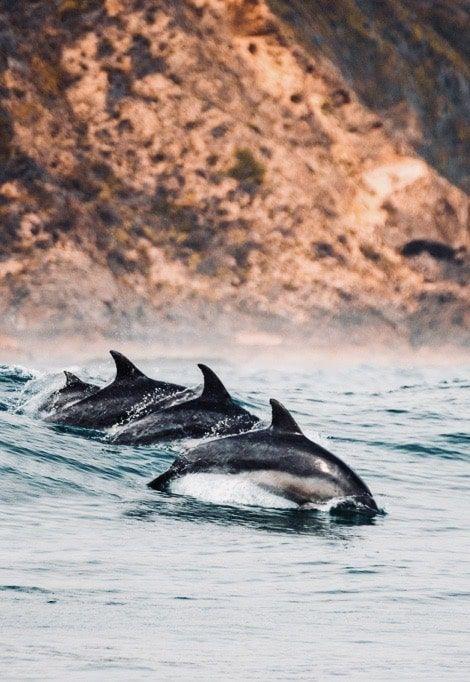week-end-en-corse-en-famille-dauphins-min