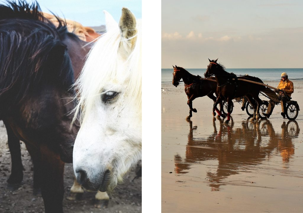 5-other-worldly-trips-not-far-from-home-normandy-deauville-villa-to-rent-horses