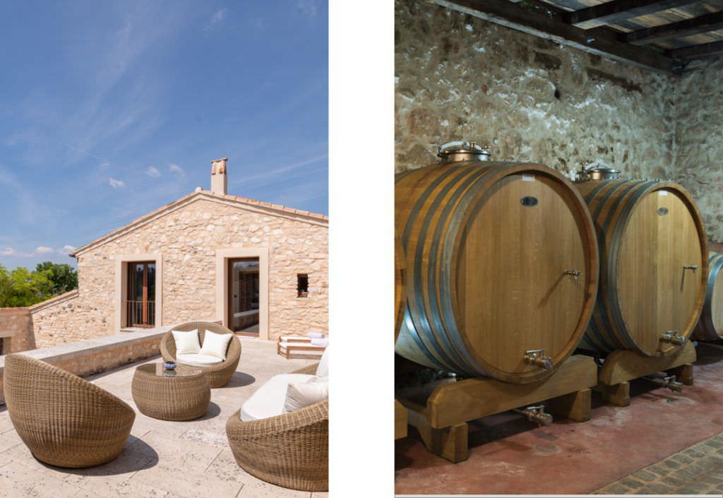 vineyard at Villa Bronze