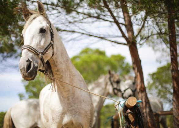 Comporta Portugal horse