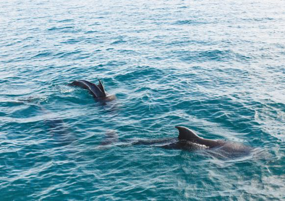 Corsica family holidays dolphins