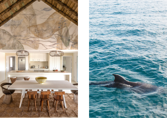 Dolphin, interior design, decor