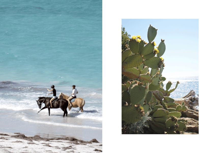 travel-spring-among-family-villa-to-rent-Corsica-horseback-le-collectionist